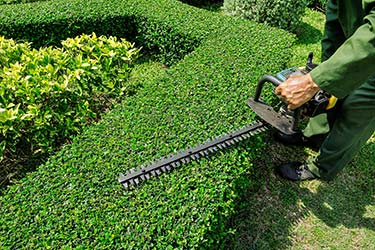 Hedge trimming service
