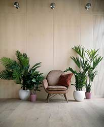 Leafy pot plants in attractive pots bring life to rustic waiting area